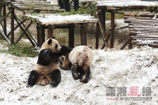 雪地功夫熊猫