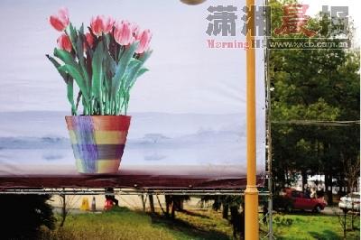 3月12日,湖南省植物园,花卉展宣传海报上的郁金香.图/朱辉峰