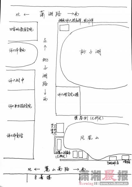 校园樟树手绘图图