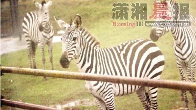 ;长沙生态动物园车行区