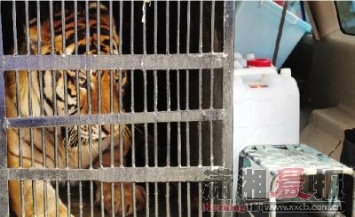湖南高速强力阻截非法运输野生动物