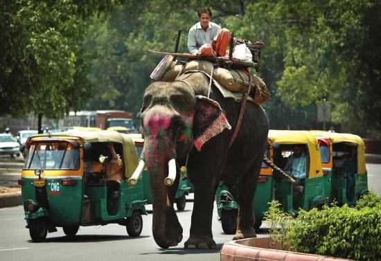 大象牛车汽车混行印度如何管理交通