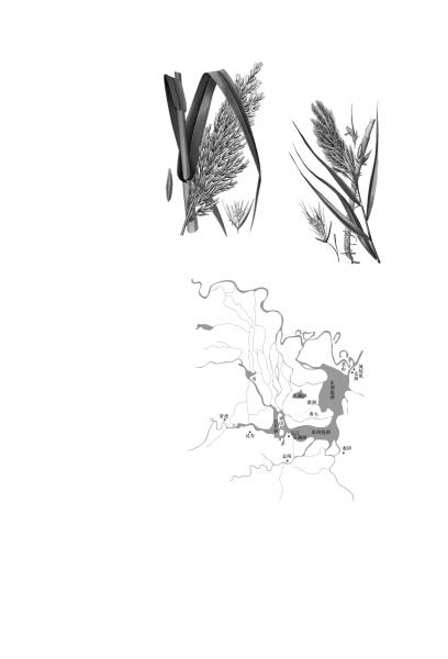芦苇叶简笔画步骤