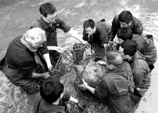 中外动物专家和饲养员将苏州动物园池塘
