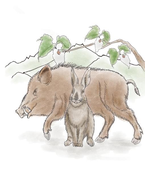 猕猴桃做动物造型图解